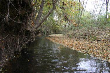Bodonski potok