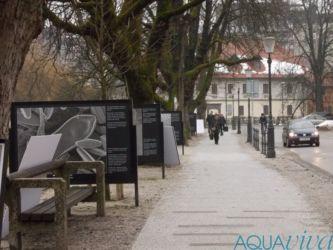 """Pripravili smo tudi 22 panojev razstave """"Razkrita čudesa reke"""", ki je predstavljala pestrost diatomej porečja Ljubljanice."""