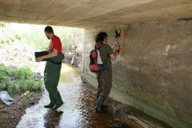 Pod mostove smo namestili kamere, s katerimi smo zabeležili nočne aktivnosti vidre in drugih živali.